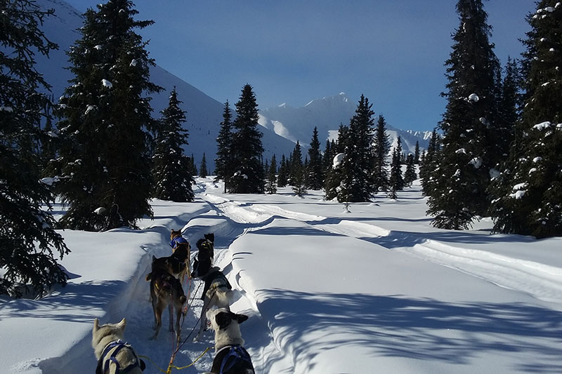 Dogsled travel in winter
