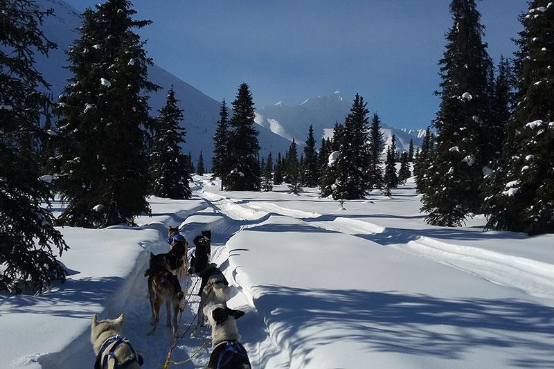 Dogsled travel in winter