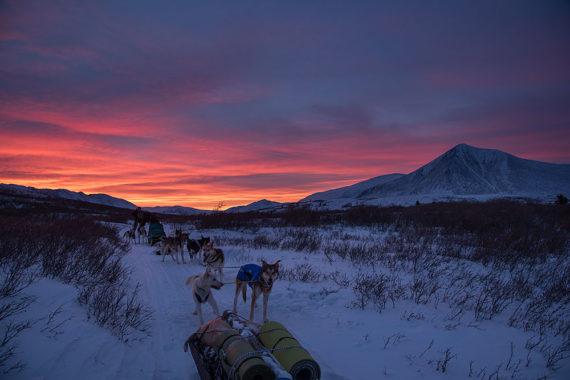 dog sledding at sunset