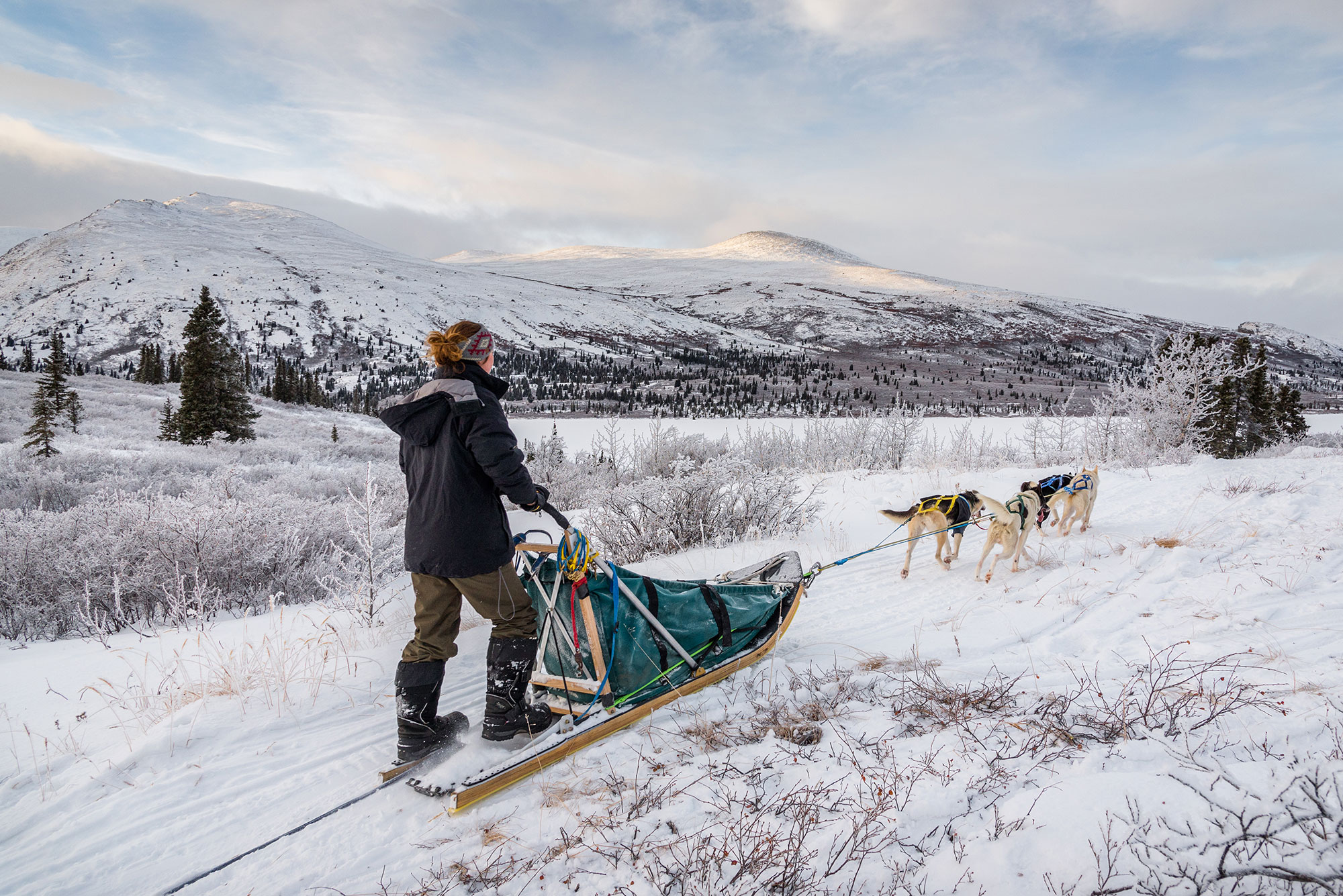 Dog sled