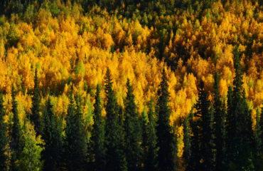 Fall Colors Yukon River